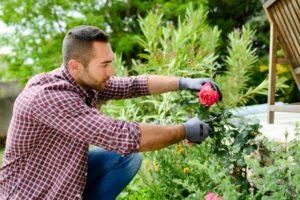 La haie fleurie: une décoration idéale pour votre jardin